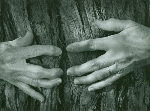 bullock - hands and bark
