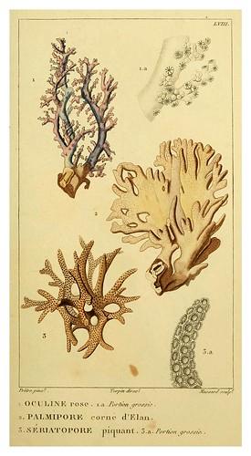 015-Manuel d'actinologie ou de zoophytologie (Volume plates) 1834- H.-M. Ducrotay Blainville
