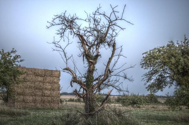 Le vieil arbre - hdri
