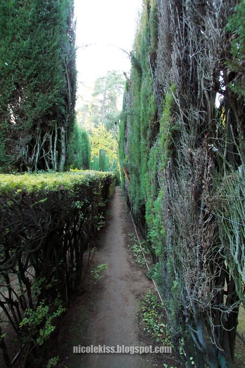 maze road