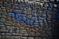 Burnt wood ( Peter_NZL) Tags: wood blue black color macro gold burnt chard d3100