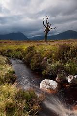 Skeleton tree - Rannoch Moor, Glencoe, Scotland (Tommaso Renzi) Tags: tree water rain skeleton flow scotland tommaso glencoe moor pathway rannoch renzi