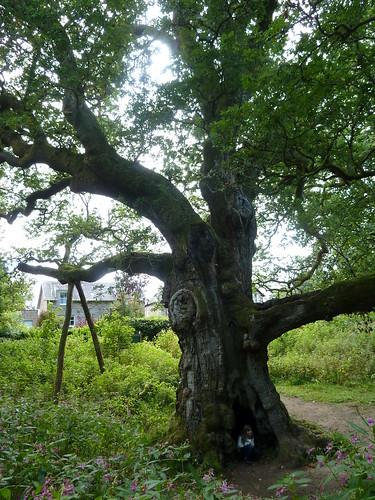 Birnam Oak, River Tay