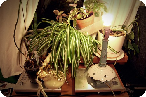plants and lamp.