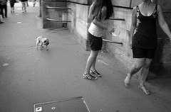 (atelier-ying) Tags: street new leica blackandwhite bw dog paris france puppy candid pug ruerivoli leicax1