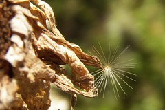 backyard novascotia seed september catcher maybefreelycopiedandusedforpositivepurposes