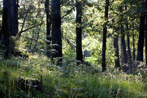 Urskog (231 av 365)