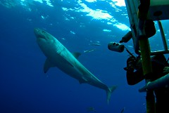 CSC_0321 (DiLyBe) Tags: white mexico island shark explorer great scuba diving cage guadalupe isla nautilus