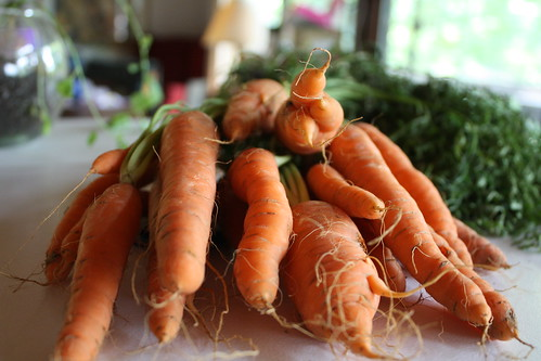 A bunch of fresh carrots with tops sitting on a counter.
