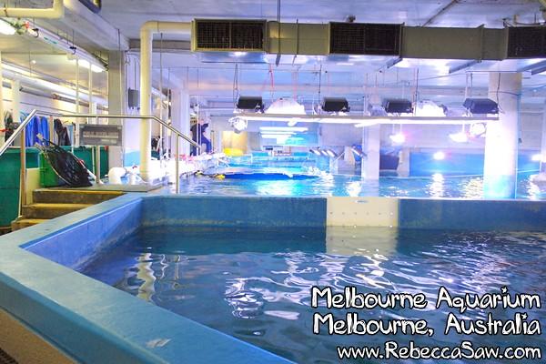 MELBOURNE AQUARIUM-05