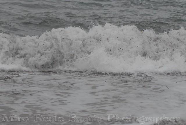 Mare D'Aspra Spumeggiante
