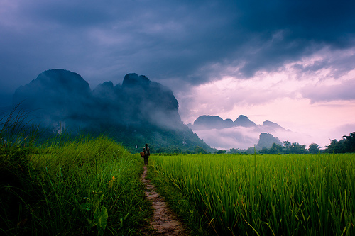 A women walking on a path through rice paddies to mountains in mist.  Vang Vieng, Laos, Asia.