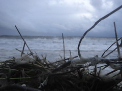 (Blue Troll) Tags: storm beach big little brothers hurricane tropical irene brther