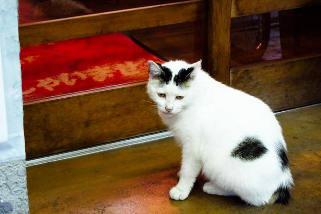 Today's Cat@2011-09-09