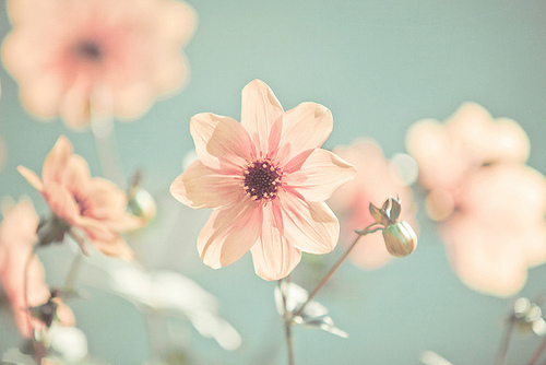 Flowers by weheartit