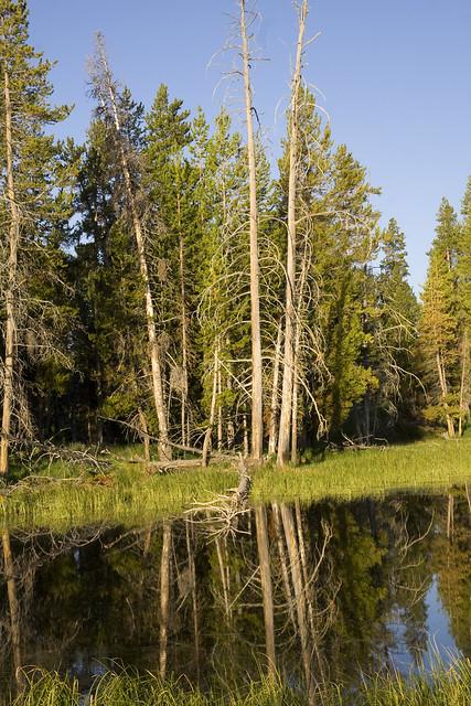 365.10 Morning Reflection Off Yellowstone Lake