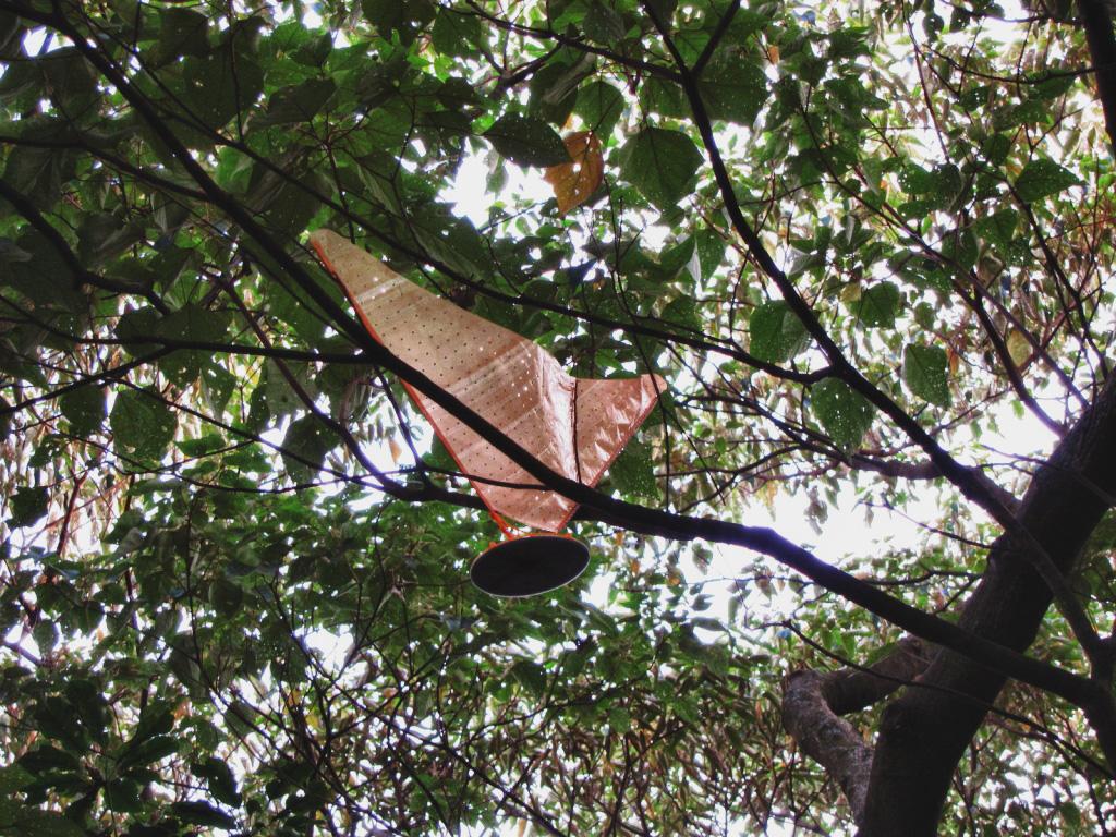 ~不明物體掉落,卡在山上的樹上