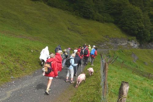 On repart accompagné par les cochons 021
