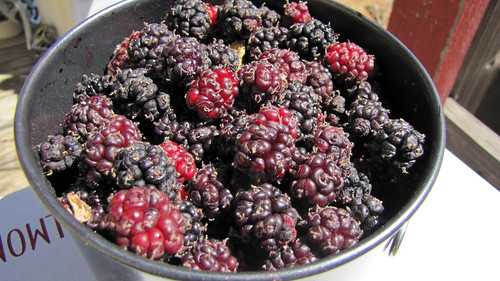 mulberries3