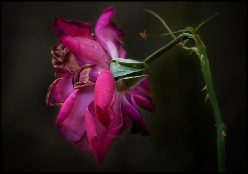 Las flores lloran más