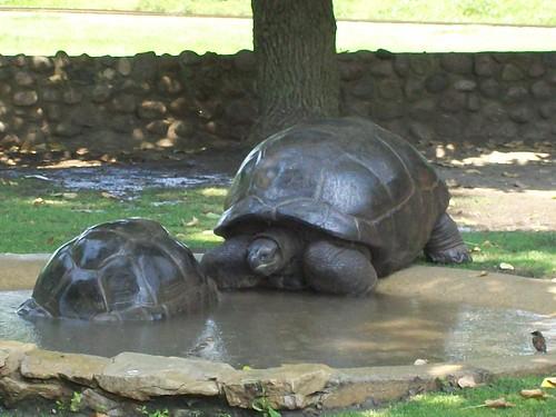 Zoo - 7-17-11 063