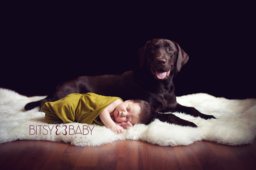newborn photographers include pets