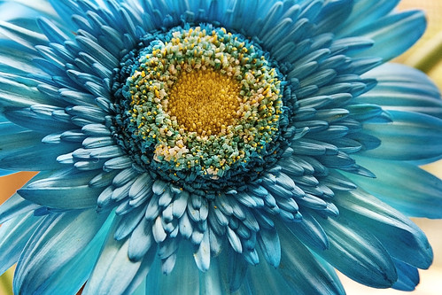 Arco iris de colores by Vilma Salazar