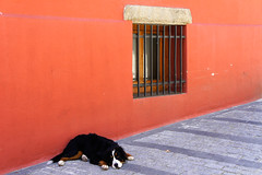 "2011_365196 - Siesta • <a style=""font-size:0.8em;"" href=""http://www.flickr.com/photos/84668659@N00/6049547056/"" target=""_blank"">View on Flickr</a>"