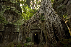 Tree at Ta Prohm (Matt Champlin) Tags: life old travel trees tree tourism nature canon landscape temple amazing ancient rainforest asia southeastasia peace treasure god buddha buddhist religion angkorwat tourists exotic prom jungle temples 7d growing taprohm ta overgrowth taprom camobodia siemriepcambodia tombraidertemple canon7d angkorprom