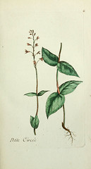 Anglų lietuvių žodynas. Žodis circaea alpina reiškia <li>circaea alpina</li> lietuviškai.