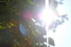 (hopesdreamseverything) Tags: sky sun tree green leaves leaf lensflare flare sunflare