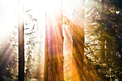 border of a wood (Martin.Matyas) Tags: wood light sun tree canon licht flora sommer natur pflanze pflanzen silence sonne wald bume sonnenaufgang baum sonnenstrahlen steiermark sonnenschein foral naturesfinest summersun naturaufnahme canonefs1785isusm eos400d naturschauspiel bumebeisonnenaufgang