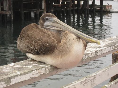 Monterey Fishermen's Wharf