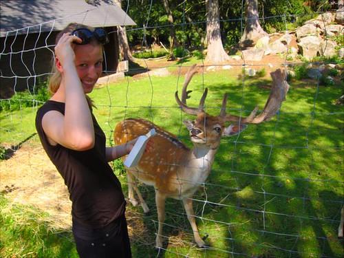 danalynn feeding deer by Danalynn C