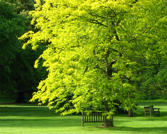 Two Benches under the Trees (Colorado Sands) Tags: trees england kewgardens green grass kew garden bench spring arboles seat jardin benches bume springtime botanicgardens royalbotanicgardens giardino rvores frhling pokok sandraleidholdt leidholdt sandyleidholdt