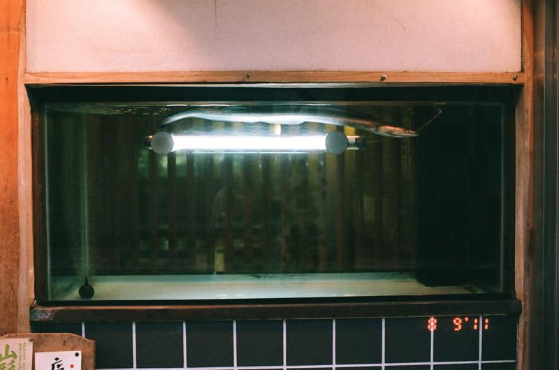 eel (10 of 11)