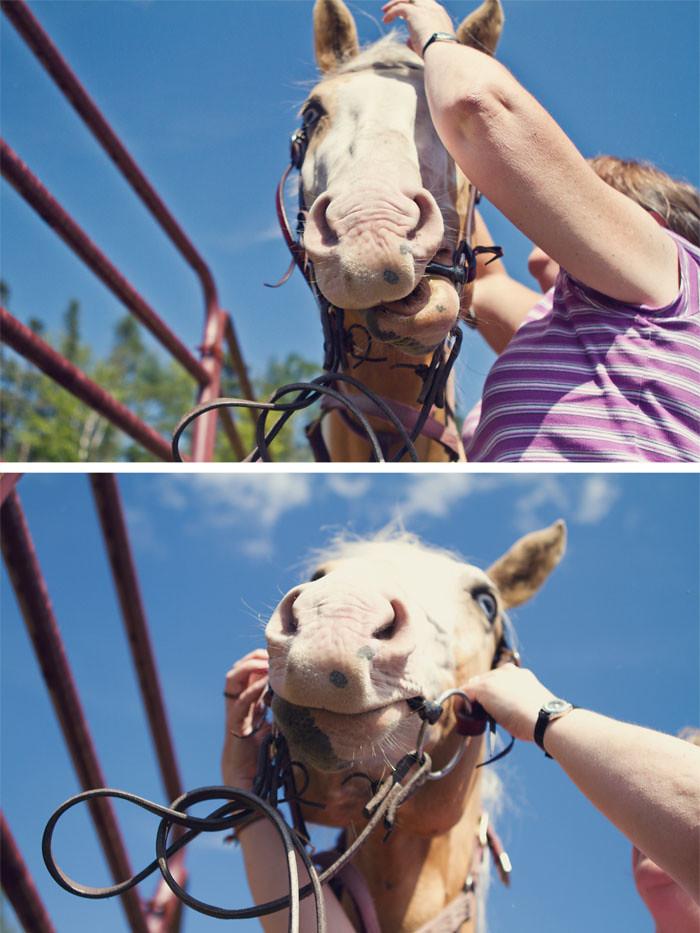 Halifax NS Wedding Portrait Horse Equine photography - Splash & Donna - Nicole Payzant -  (3 of 26)