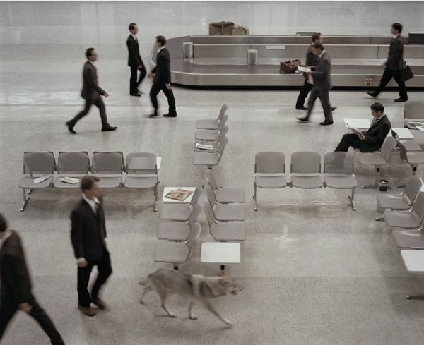 ESU-the-wolf-in-Tempelhof