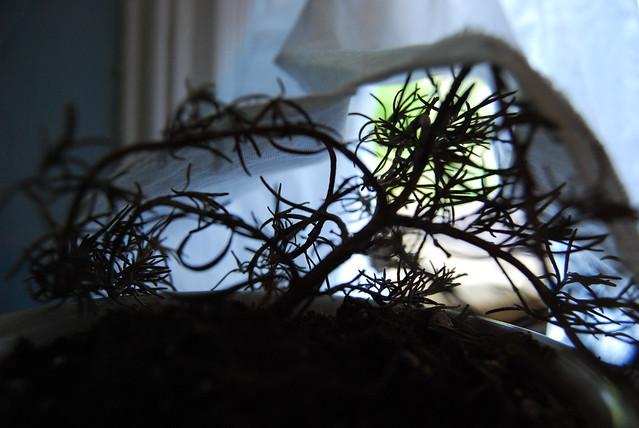 Dead house plant : (