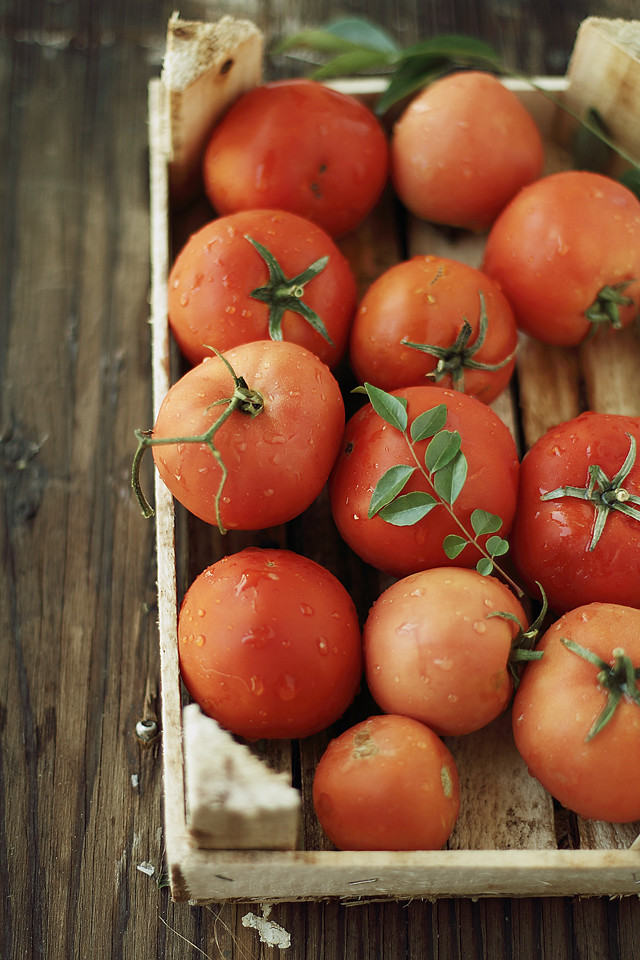 tomatories