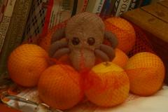 Orange Mite