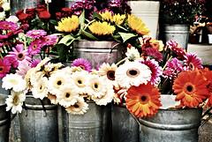 Flowers at the Borough Market (Giorgia Grassini) Tags: uk flowers england flower london fleur fleurs londonbridge bucket market unitedkingdom boroughmarket londres angleterre borough buckets fiori fiore mercato londra girasole regnounito inghilterra girasoli secchio royaumeuni secchi