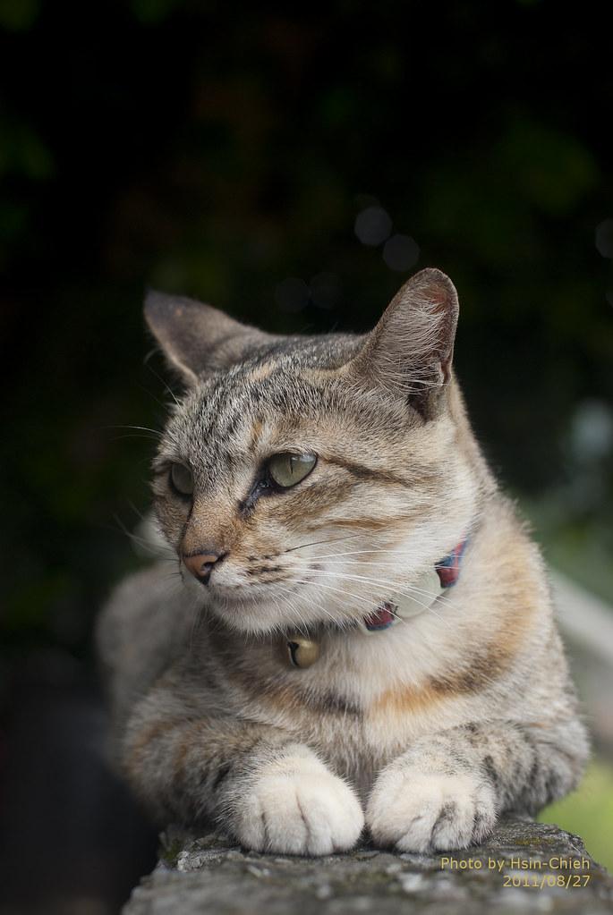 公主遇見貓