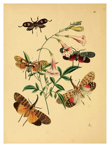 015-The cabinet of oriental entomology…1848- John Obadiah Westwood