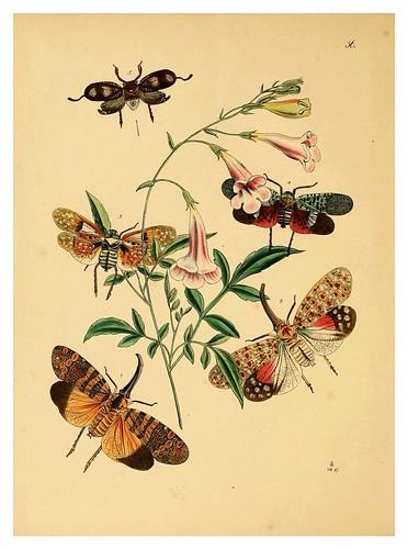 015-The cabinet of oriental entomology…1848- John Obadiah Westwood
