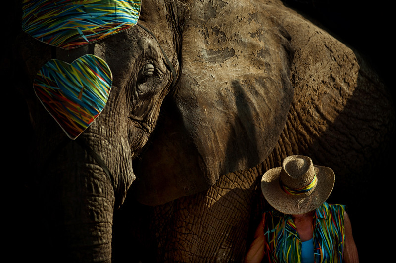 110821_elephants_150_blog