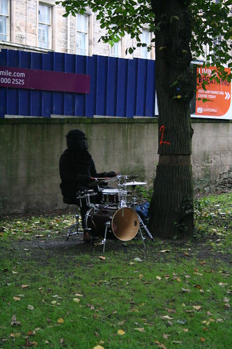 A Gorilla. Drumming. Under a tree.