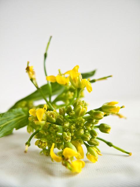 IMG_0968 菜心花 ,Chinese Mustard Green Flowers
