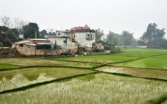 110_LAO87940021 (TC Yuen) Tags: vietnam sapa hmong terracefarming locai