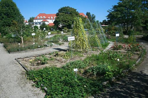 Systemgarten - Botanischer Garten München
